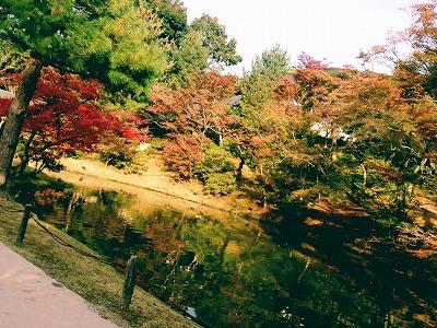 s-2015.11.21 森ブログ②