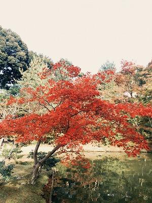 s-2015.11.21 森ブログ③