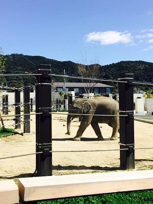 s-京都動物園 ぞう
