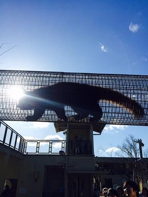 s-京都動物園 レッサーパンダ