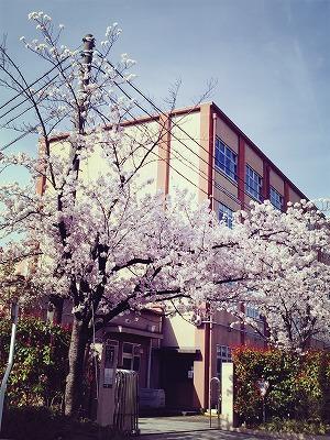 s-2016.4.6 桜③