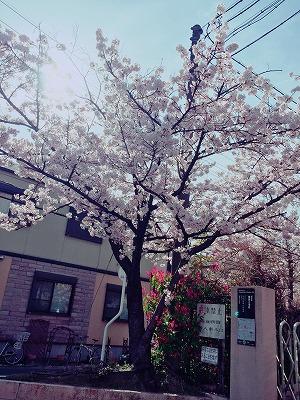 s-2016.4.6 桜②